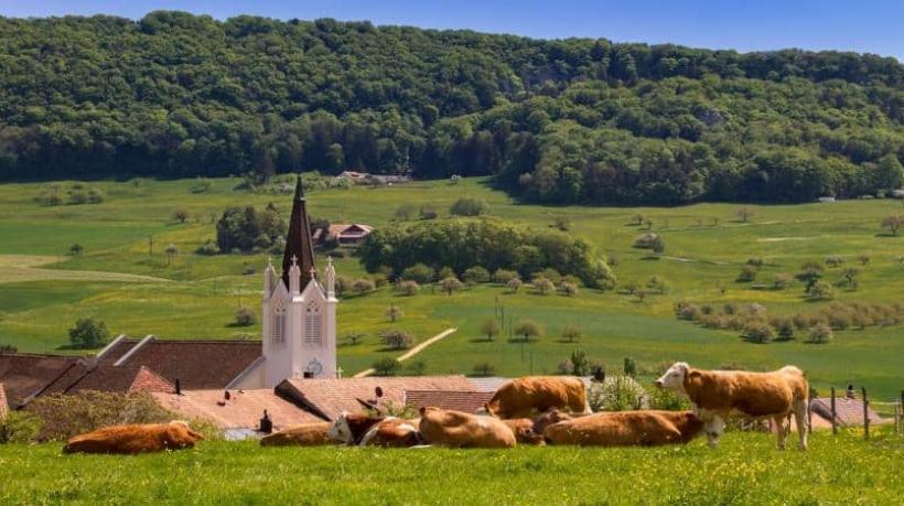 logística fazenda de gado leiteiro